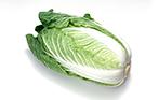 叶菜类蔬菜白菜的营养特性与施肥特点
