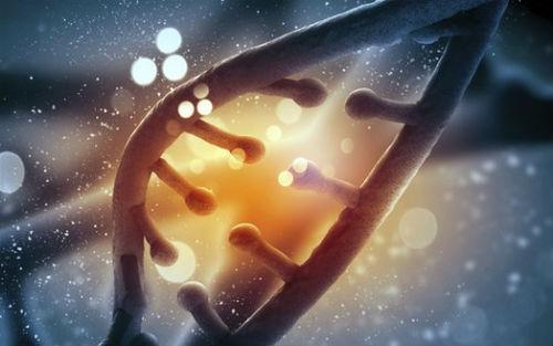 酵母细胞壁鉴别知多少