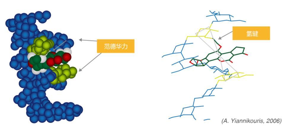 霉菌中的足细胞结构