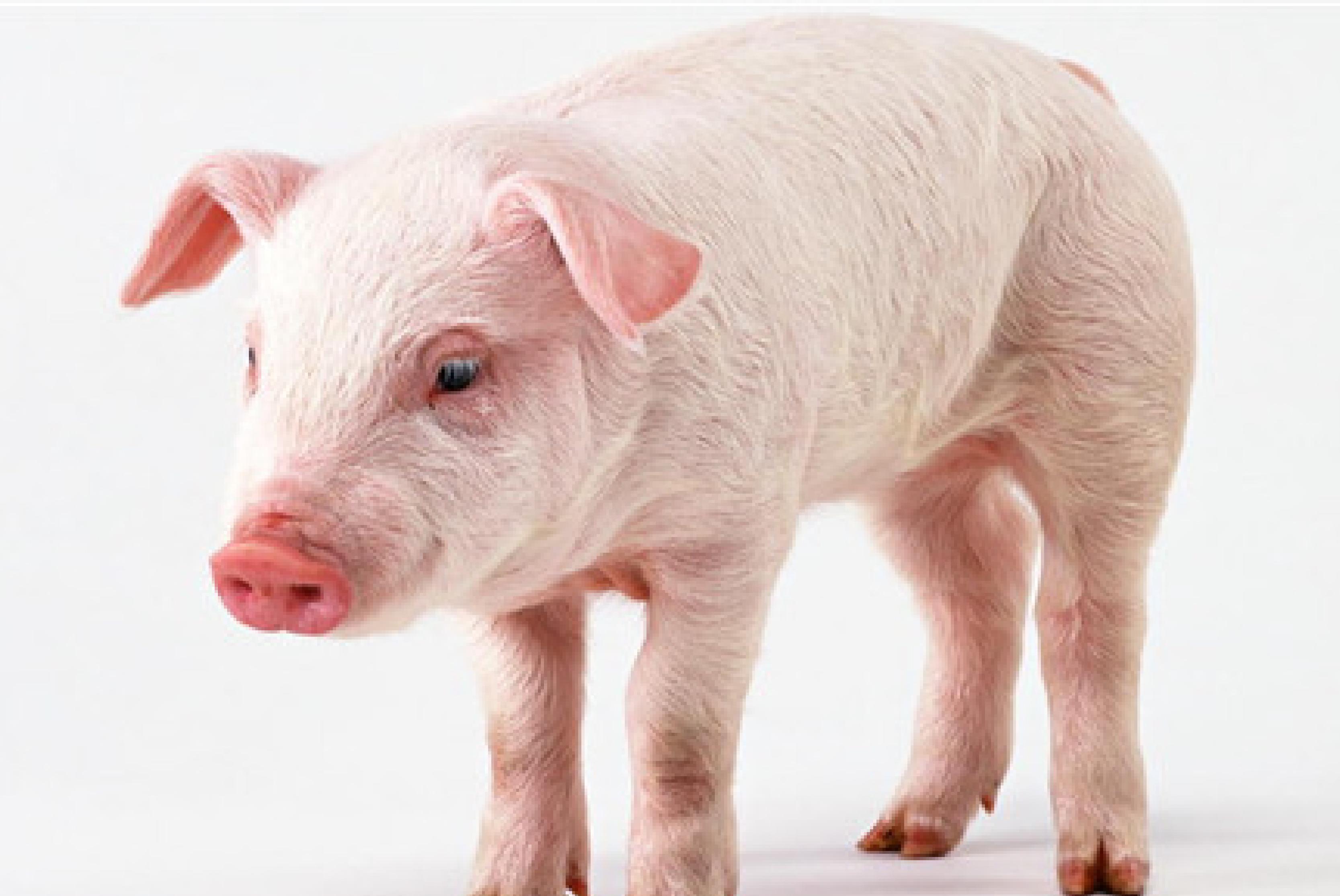 【实证案例】福邦抗腹泻酵母预防仔猪腹泻