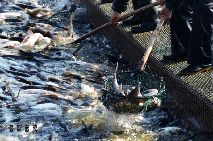 酵母源有机渔肥—水产养殖的良好碳源