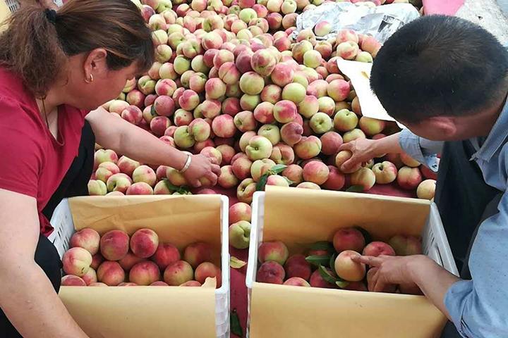 """""""福邦""""酵母源有机肥在安徽油桃上的应用"""