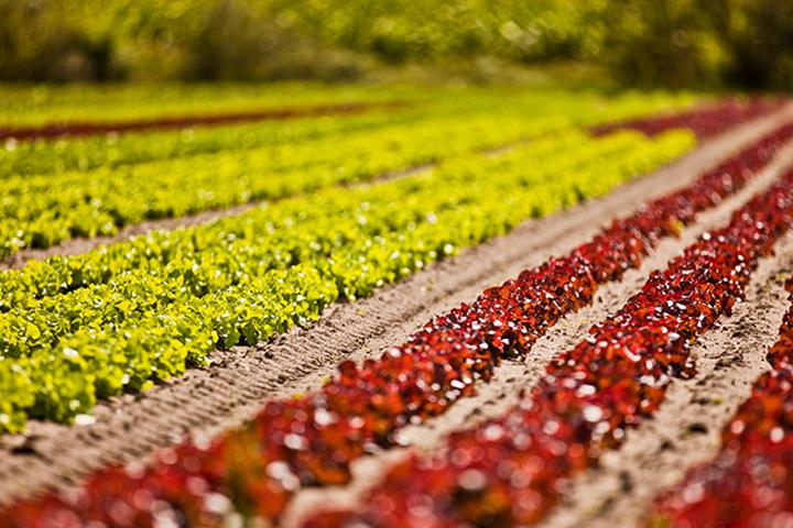施用有机肥对土壤的五大作用