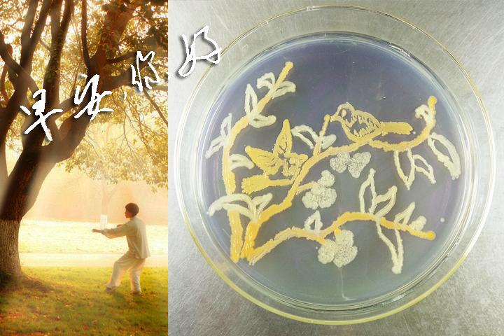 欣赏 | 培养皿中五彩斑斓的微生物世界