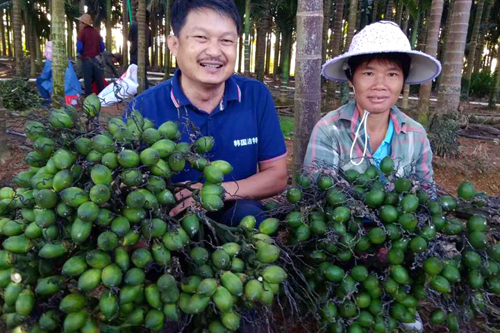"""""""福邦""""烟茎生物有机肥在海南槟榔上的应用"""