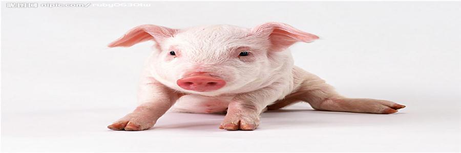 酸性蛋白酶在饲料中的应用