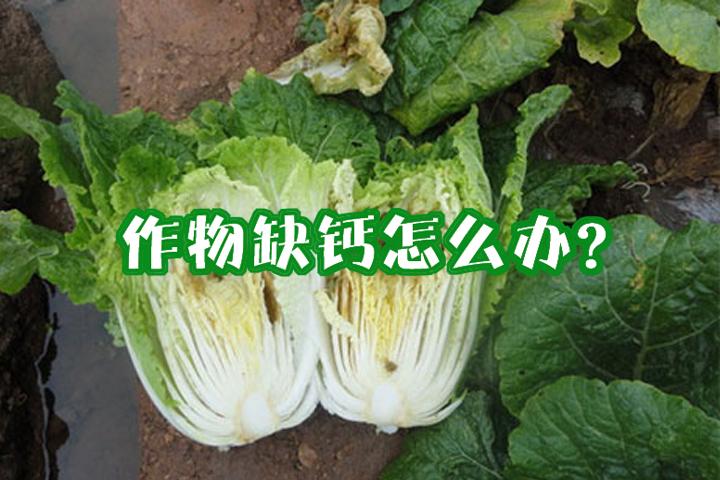 作物缺钙的原因和防治措施