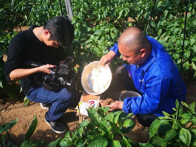 安琪福邦酵母源肥料现场酵母发面拍摄