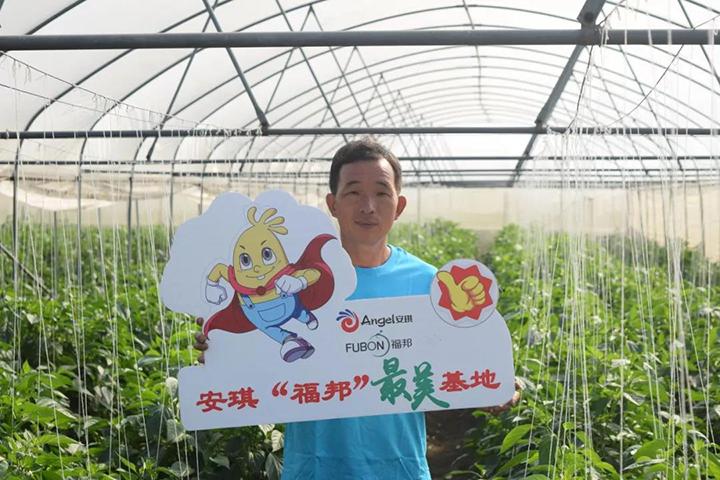 卢大生在大棚内种植辣椒