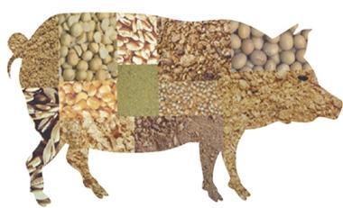 蛋白酶——发酵豆粕好帮手