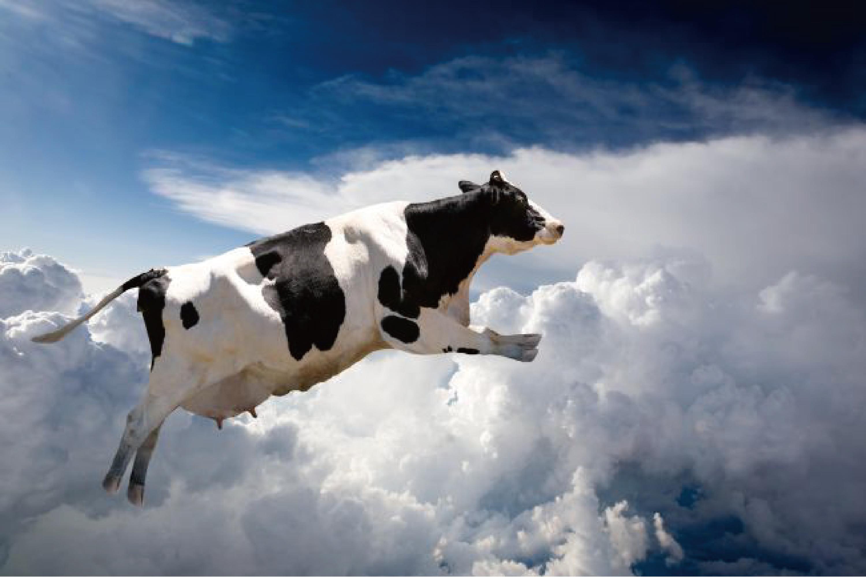 霉菌毒素对奶牛养殖的危害及脱毒应用研究进展