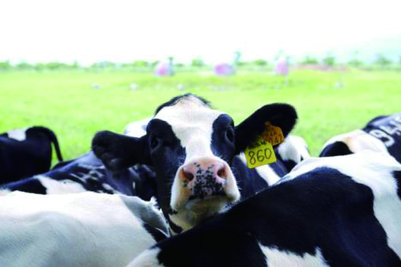 夏季奶牛热应激对奶牛的危害及应对措施