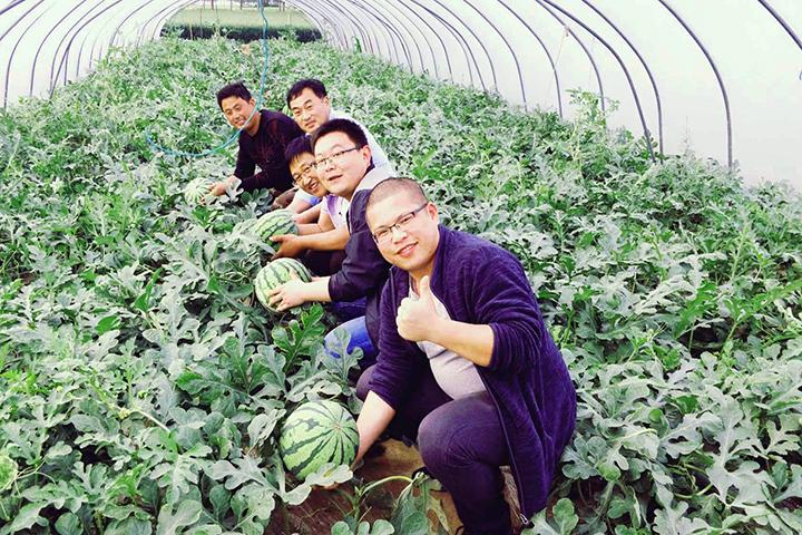 """""""福邦""""烟茎生物有机肥在河南西瓜上的应用"""