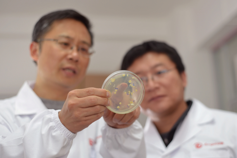 发酵菌剂系列——【菌种优势篇】安琪菌种自主选育平台