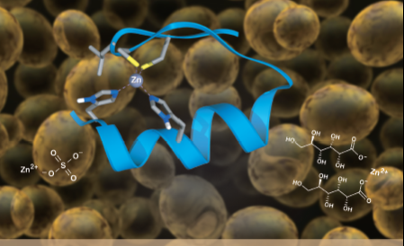重磅!安琪连发2篇关于富锌酵母研究的SCI论文