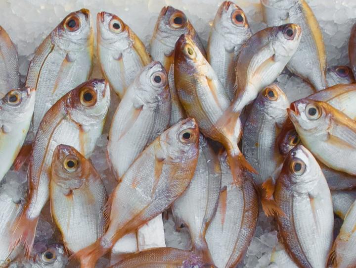 酶制剂助力鱼虾蛋白水解