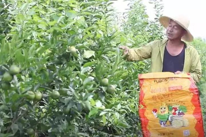 酵醒土壤 · 种出品质:比广西沃柑晚上市一个月,黄坪沃柑去年卖到6元/斤,今年看涨!