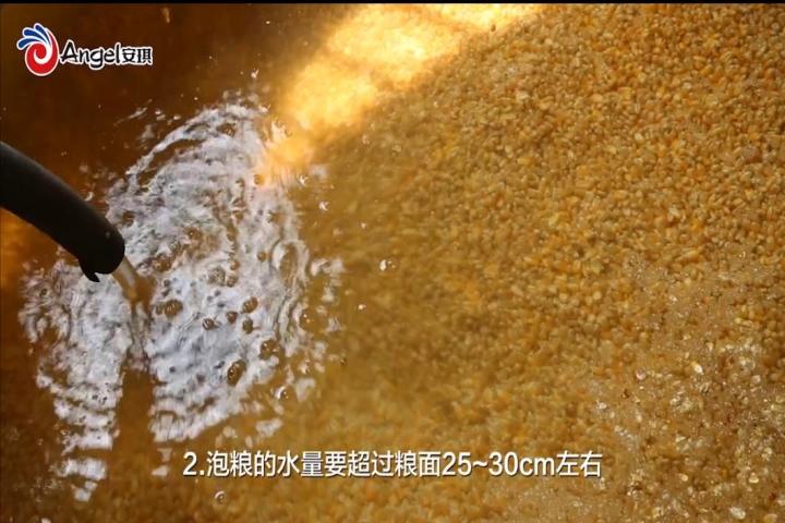 處(chu)理好糧(liang)食,提高了出(chu)酒,視頻(pin)解說(shuo)釀酒技術(shu),釀好酒!