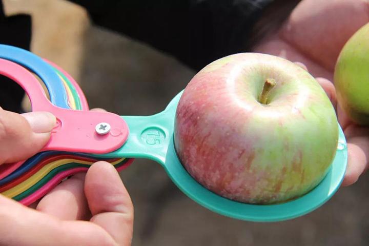 酵醒土壤 · 种出品质:这苹果,没上市、已订光、糖度达17:种植秘方曝光……