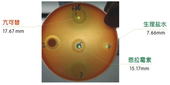 亢可替对猪产气荚膜梭菌的抑菌圈研究