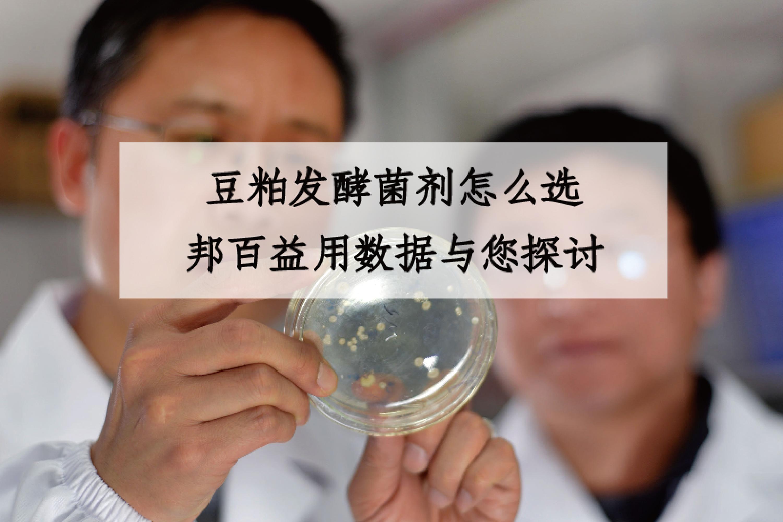 豆粕发酵菌剂怎么选?邦百益用数据与您探讨