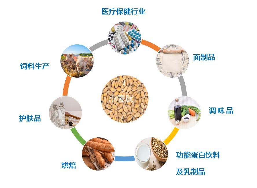 小麦肽的应用