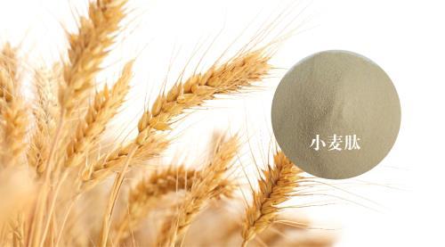 酶法制备小麦肽