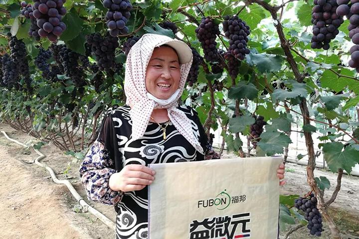 福邦风云榜:想要种好葡萄,科学和勤劳都不可或缺