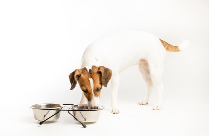 黴解過程對寵物誘食劑的風味(wei)形成至(zhi)關(guan)重要(yao)