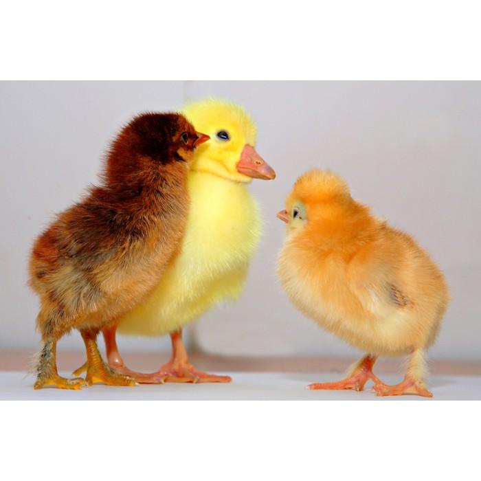 养殖业饲料品质提升方案